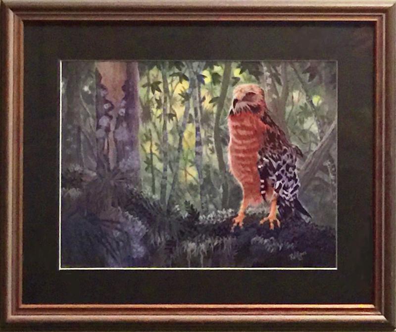 703 Red Sholdered Hawk